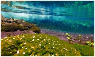 Воды Фудзи